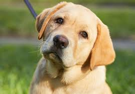 La coquette chienne qui se fait promener à la garderie pour chien