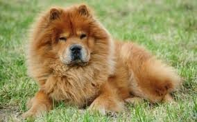 Le chien Roméo en vacances à la pension pour chiens Rêves Canins